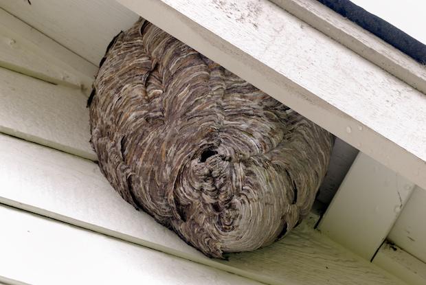 軒下にできたハチの巣